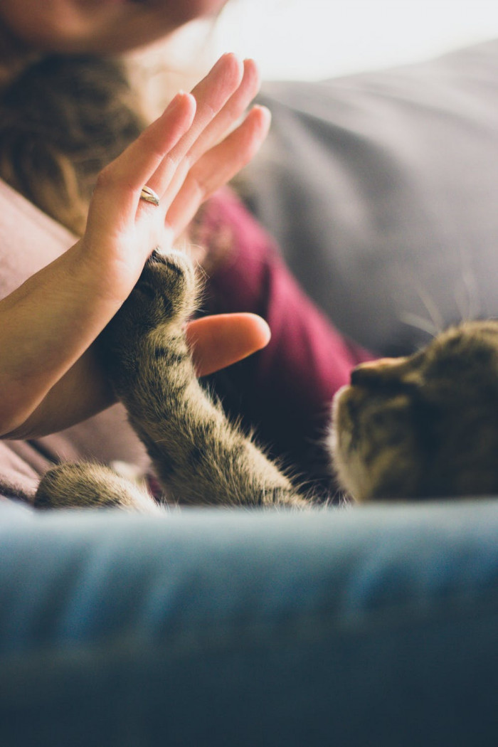 Cat people are also no more neurotic than dog owners are according to the study