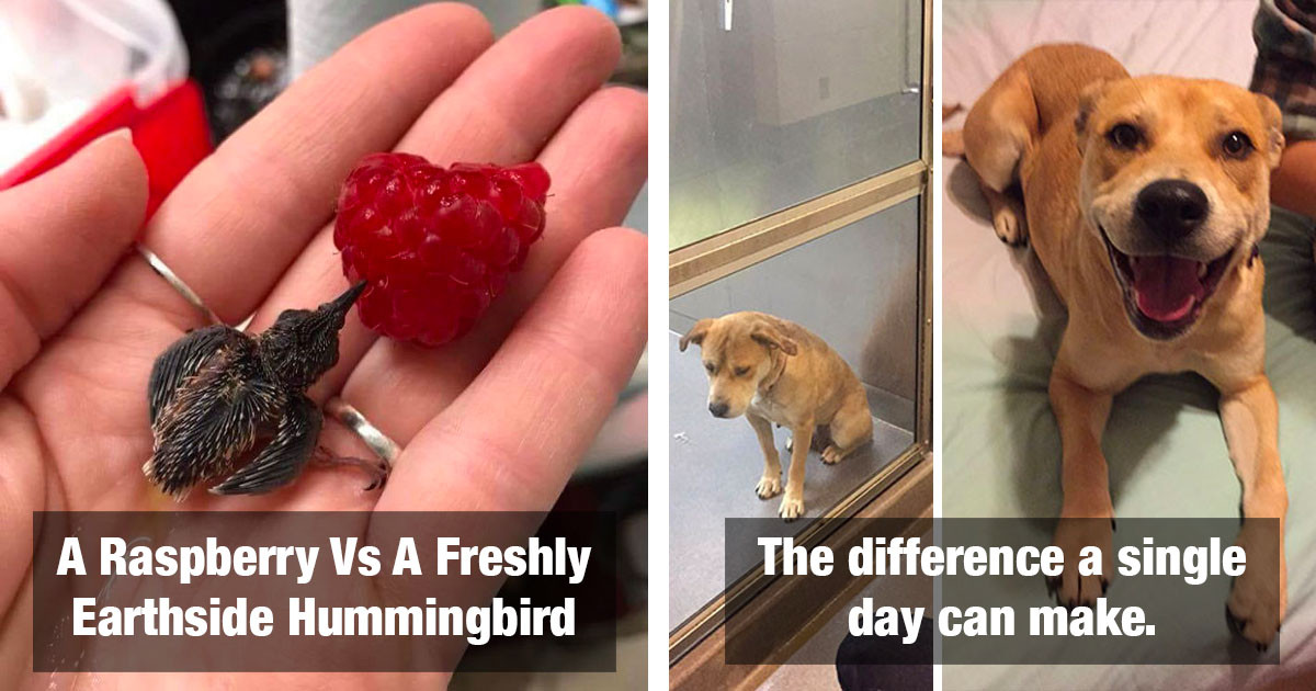 Comparison Images Between Random Things Might Give You An Interesting New Perspective