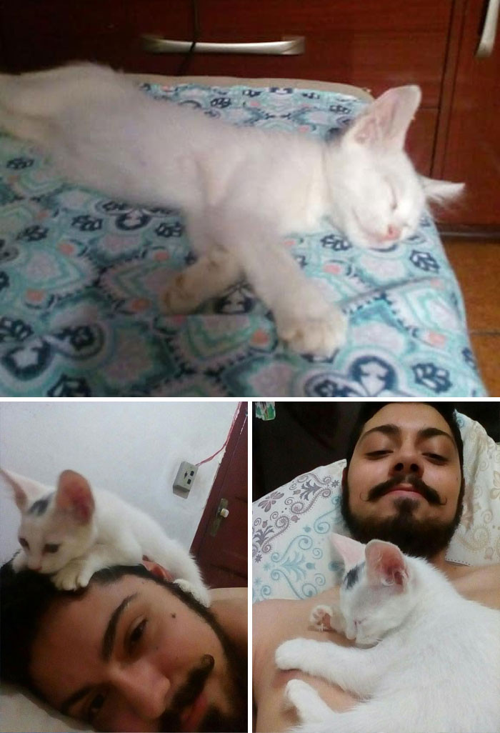 #7 First Photo: This Was Not My Cat, He Just Entered My House And Slept In My Bed Second Photo: Now He Climbs Me Third Photo: He's Definitively My C A T T O Now