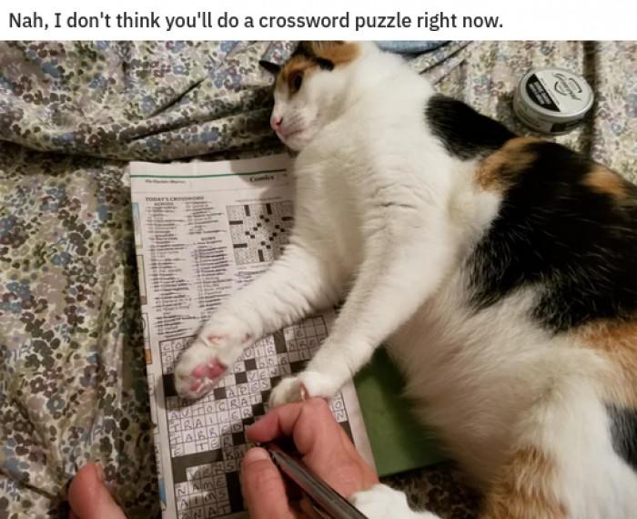 17. Nahhhh bro, pet the cat instead.