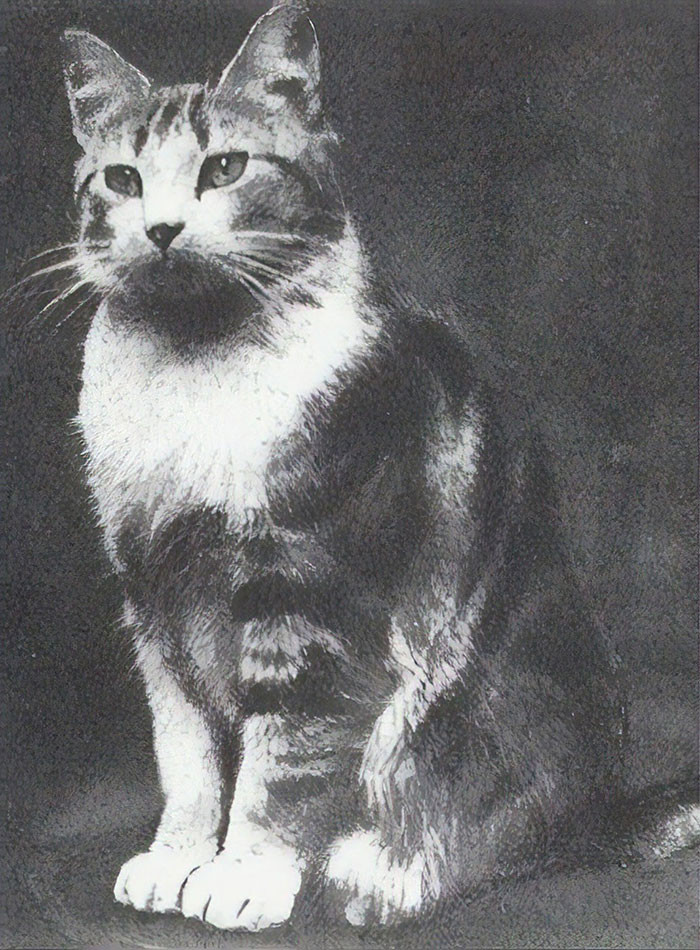 #18 Faith, The Church Cat Of St. Augustine's Church In London Who Protected Her Offspring From An Air Raid