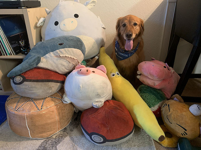 #2 A dog and her plushies.