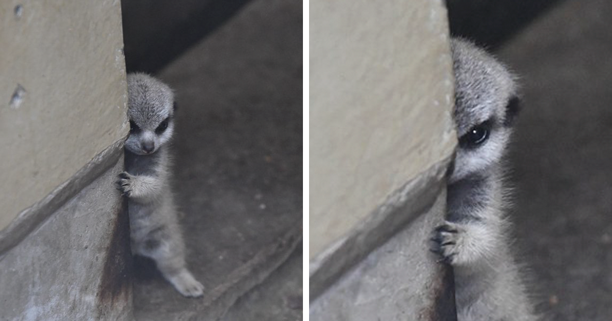 Photographer Captures Baby Meerkat and Family In 23 Adorable Pics