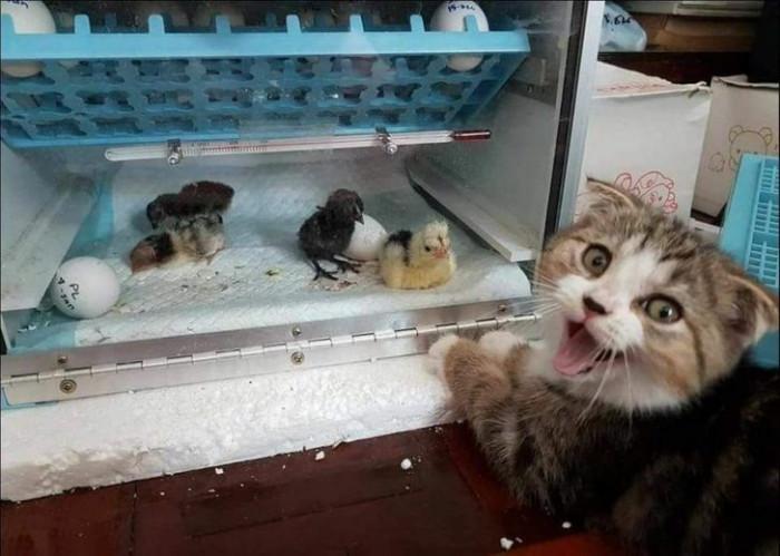 """8. """"Human, meet my new friends!"""""""