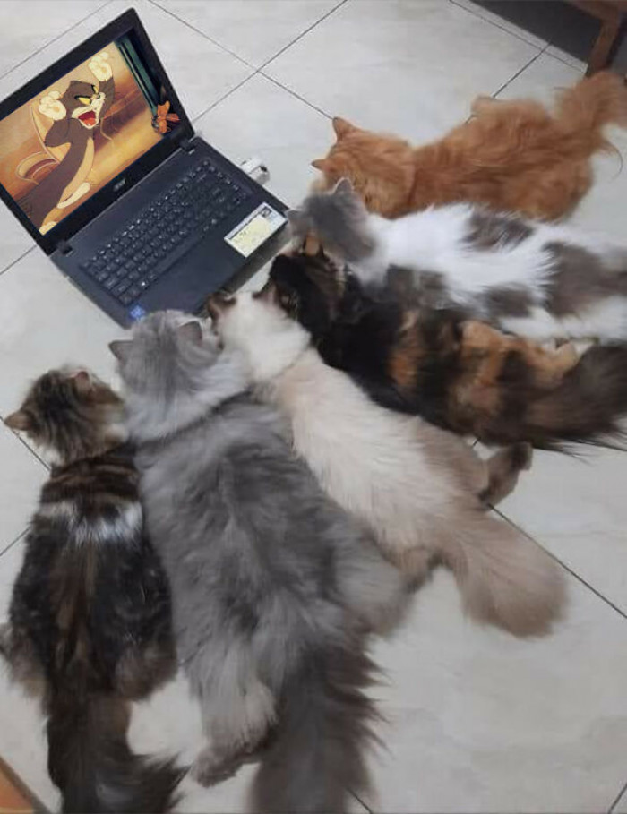 2. Learning how to be real cats