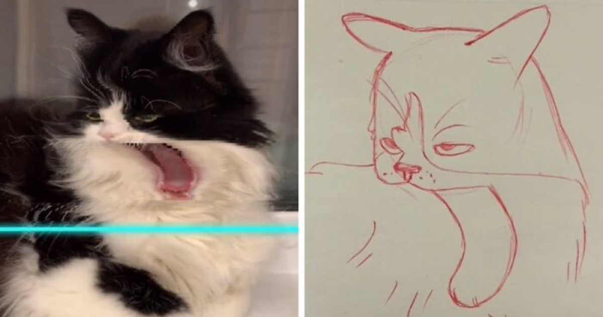 17 Hilarious Illustrations Of Cats And Dogs Captured With TikTok's Time Warp Scan Filter