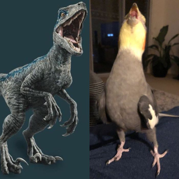 #34 Evolutionbirb