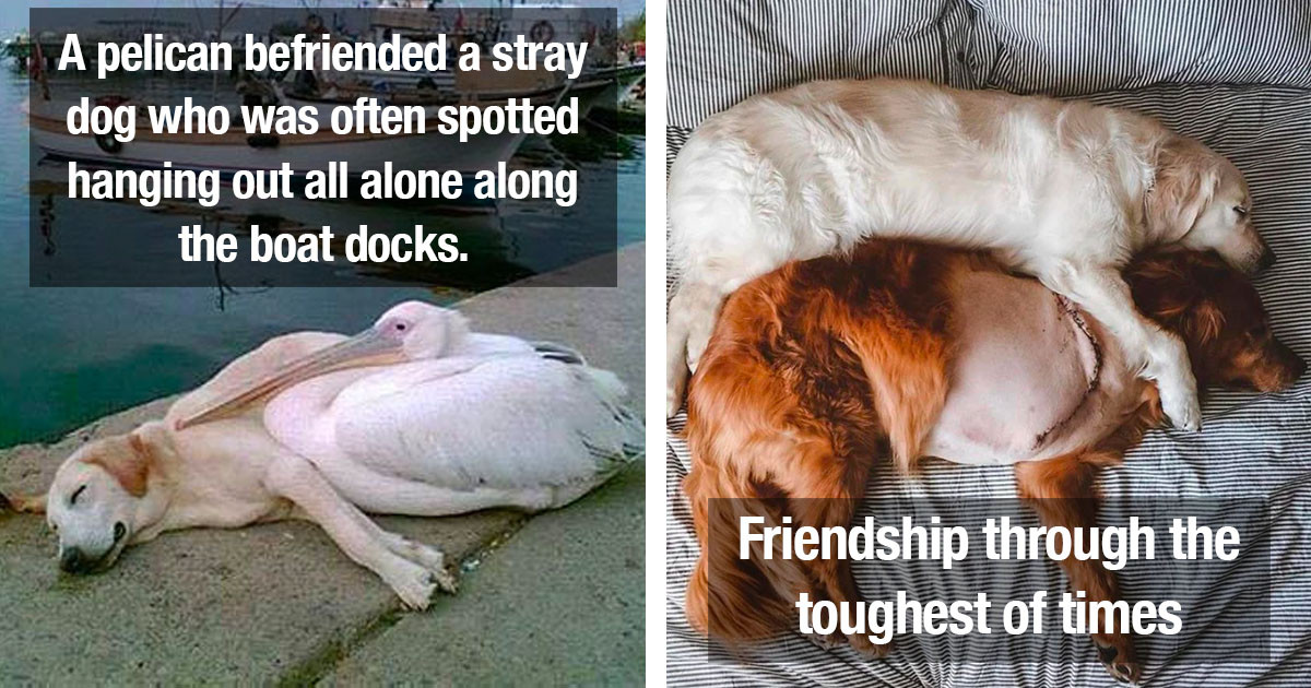Wholesome Dogs Posts That Prove Just How Essential Dogs Are In Our Lives