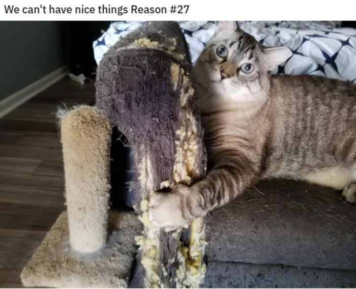 21. Or, a counterpoint: you have a nice cat.