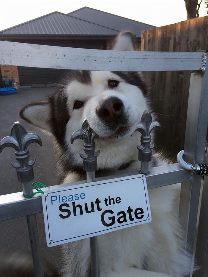 # 7 Não ... Abra o portão, por favor