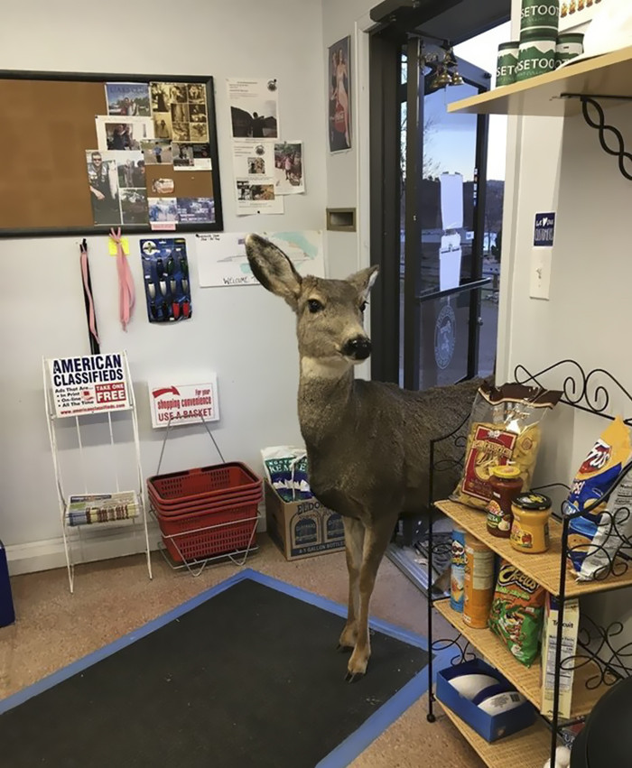 The adorable doe casually strolled in to do some browsing.