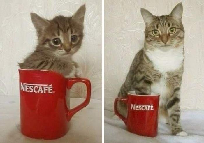 32. Kitten is all grown up