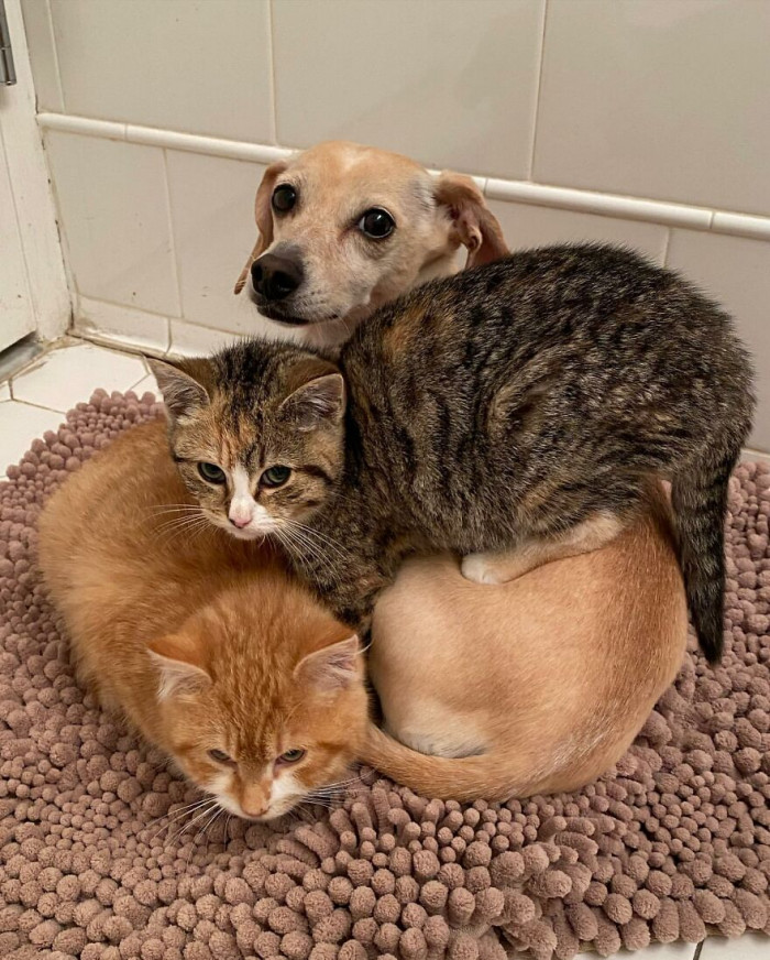The kittens were very shy and afraid of people as even the local animal rescuers who rescued them remembered having had trouble catching them