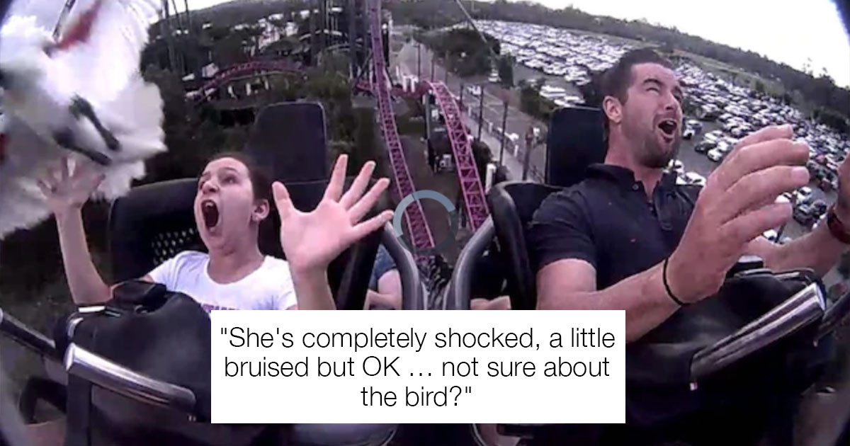 Hilarious Incident Where Ibis Whacks Girl While On a Roller Coaster
