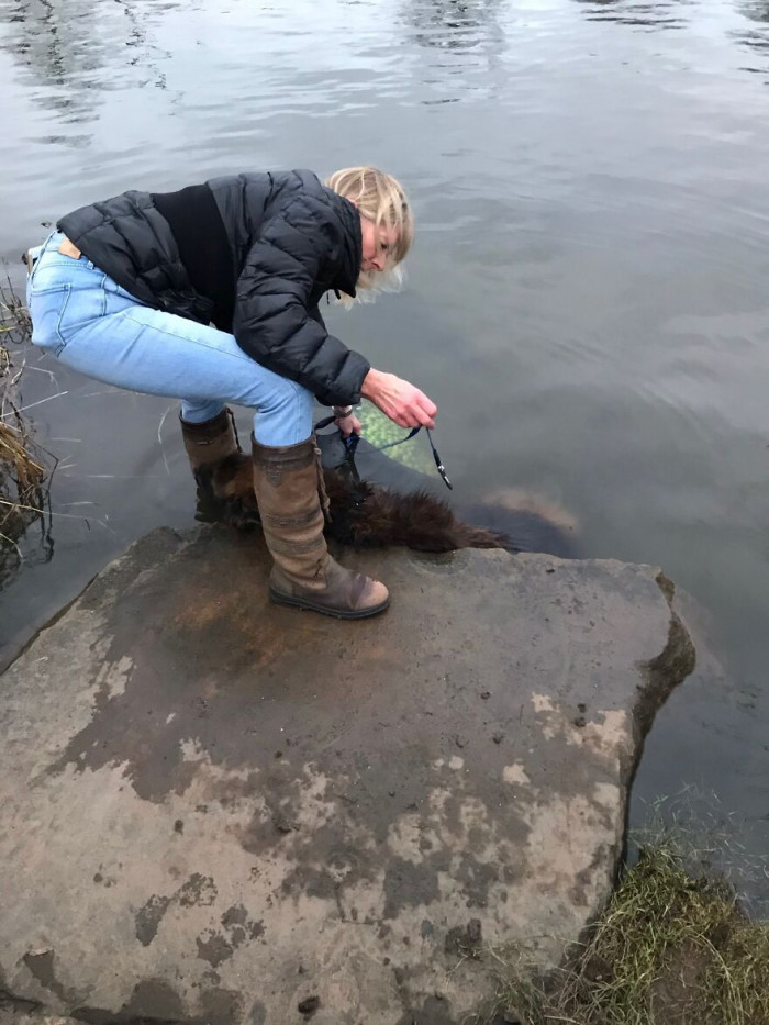 Bella, a German Shepherd Dog was found with a rock tied to her head in freezing, cold water.