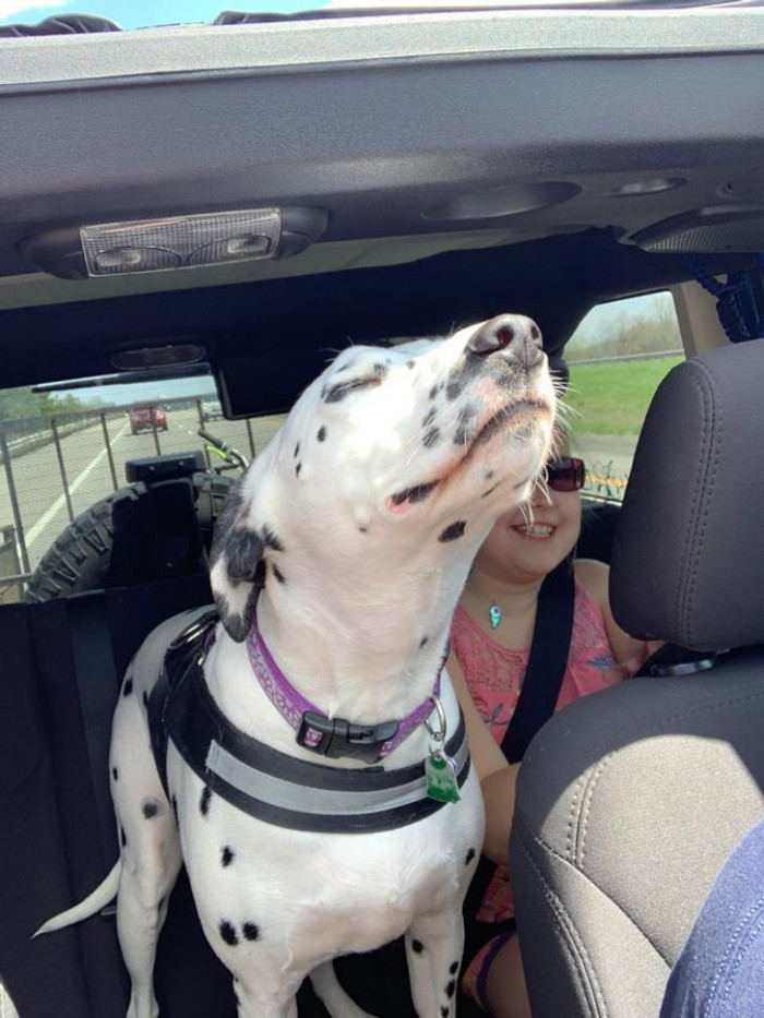 """16. """"This was the first topless Jeep ride of the year for our dog. She was in heaven."""""""