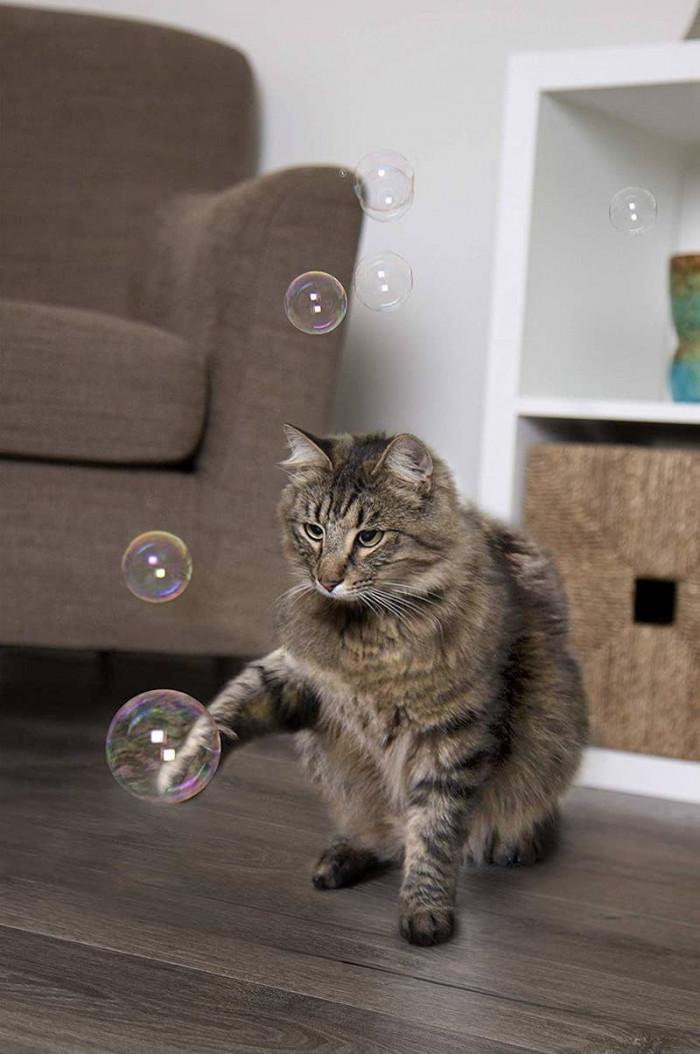 1. Catnip Bubbles