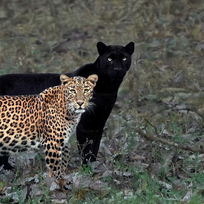 """Mithun chose to name this photo """"The Eternal Couple"""""""