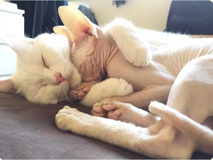 Kitty cuddles for warmth