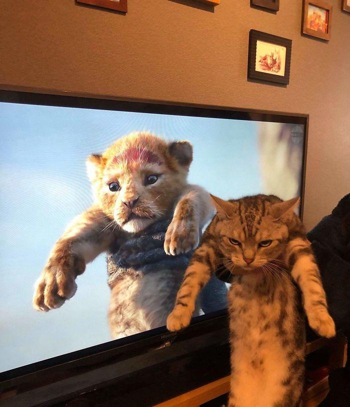 Movies Vs Real Life