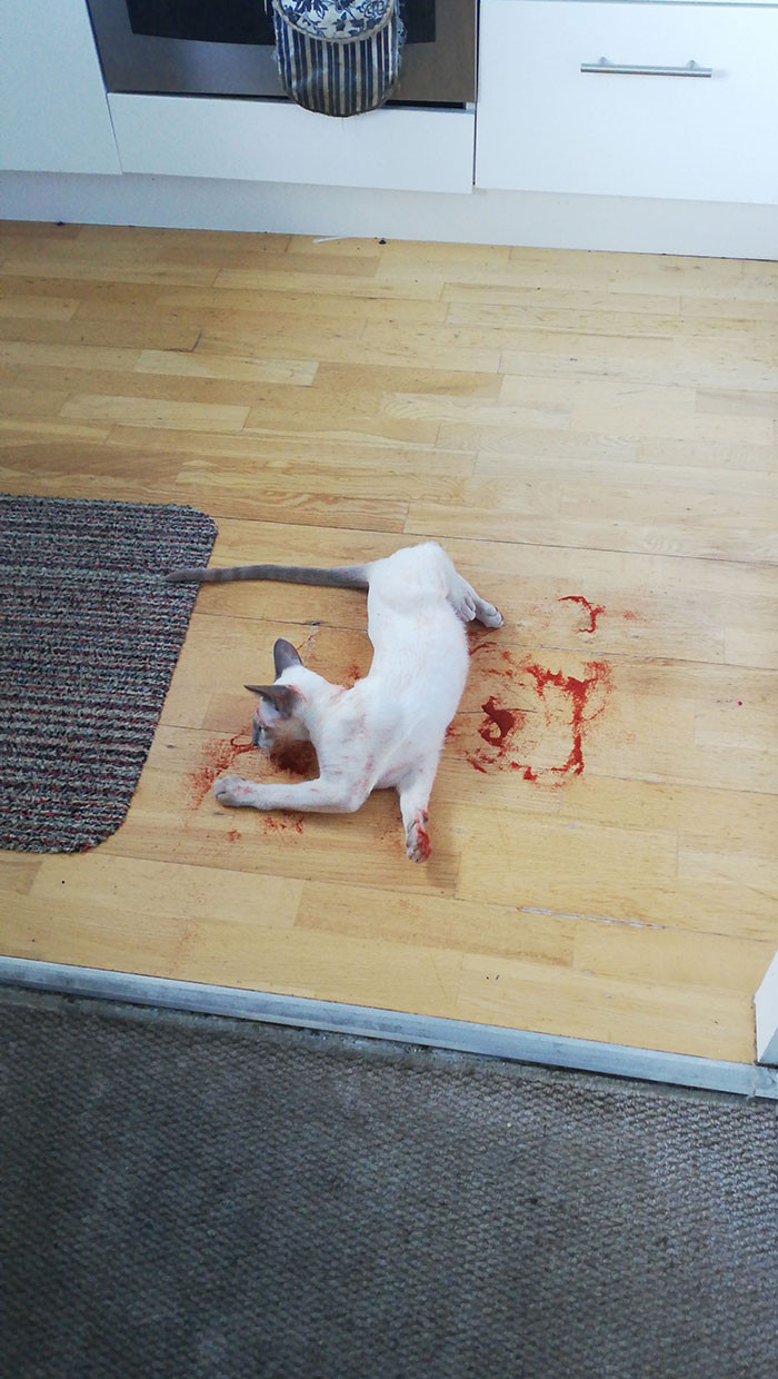 Cat playing with paprika. Thank god