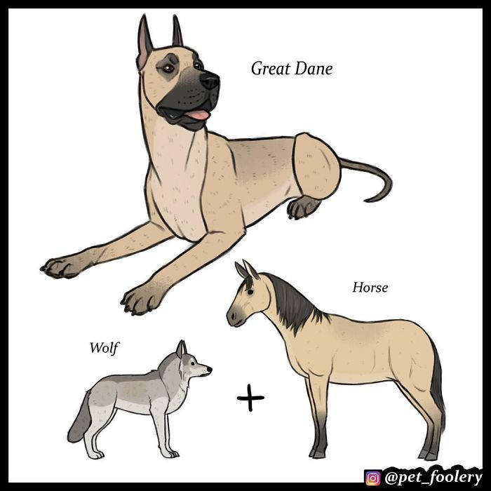 Forget catdog. Here's horsedog.