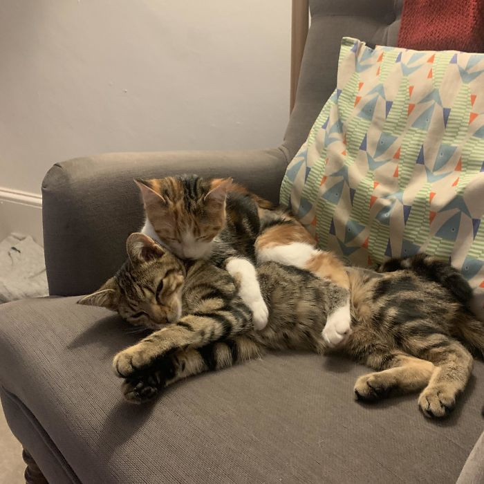 47. Adopted These Two Beauties, They Are Sisters And Totally Inseparable
