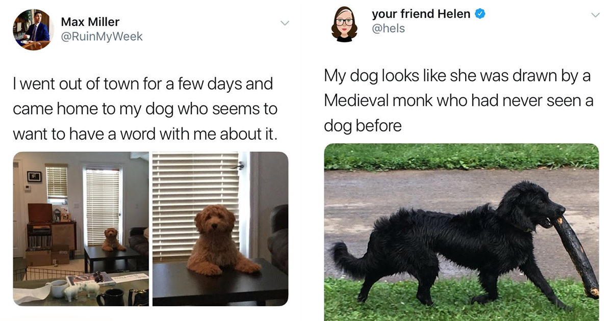 Tweets About Dogs Every Dog Lover Will Absolutely Adore