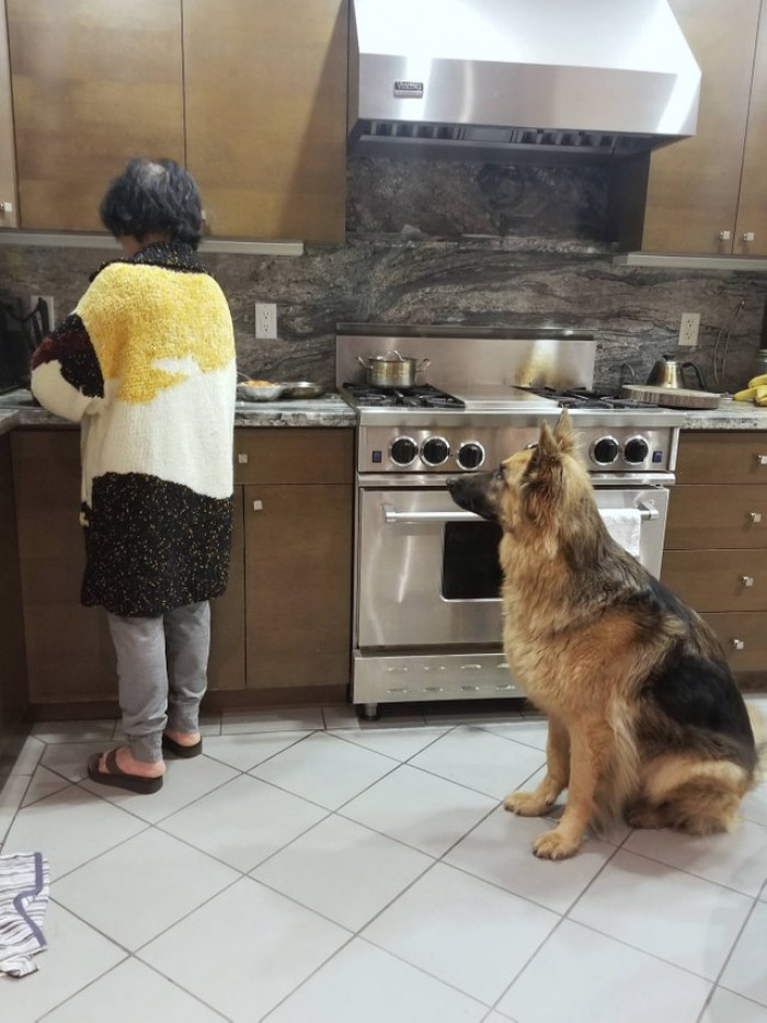This mother who refused to pat their puppy when they first got him... and now cooks him sweet potatoes every day.