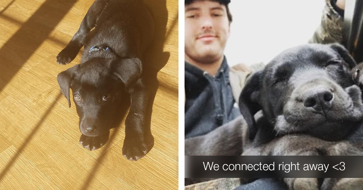 Deaf Man Adopts Adorable Deaf Puppy And Teaches Him Sign Language