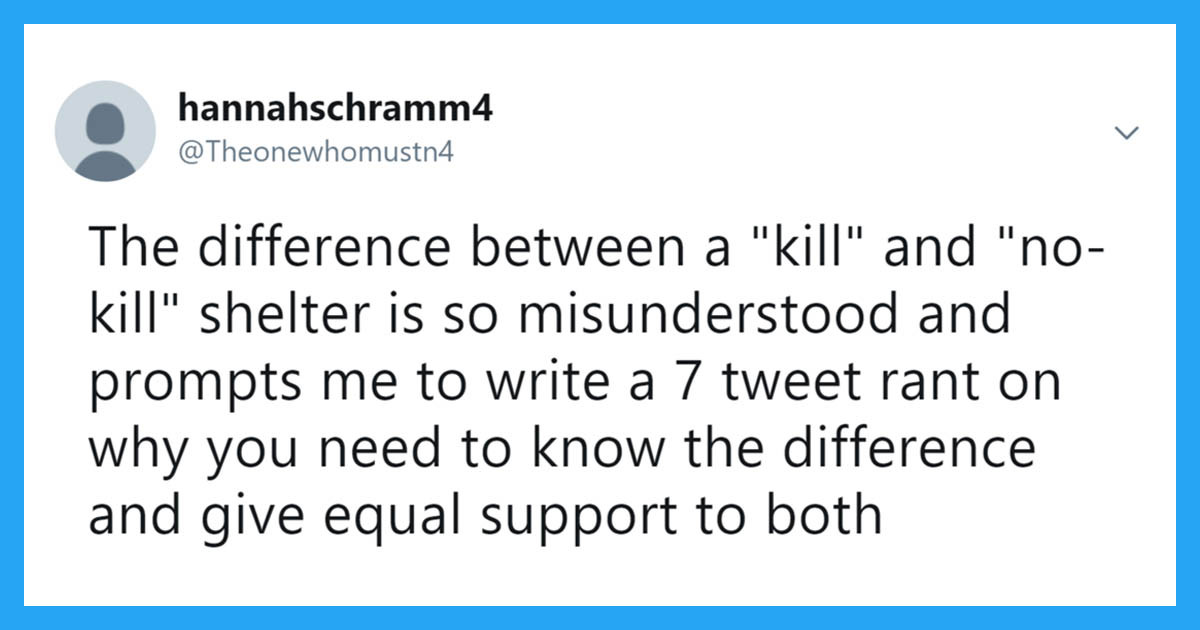 Twitter User's Explanation For The Difference Between A 'Kill' And 'No-Kill' Animal Shelter Is Heart Wrenching