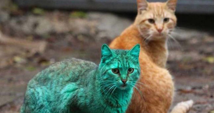To be specific, it was discovered the cat's green tint was due to it sleeping on an