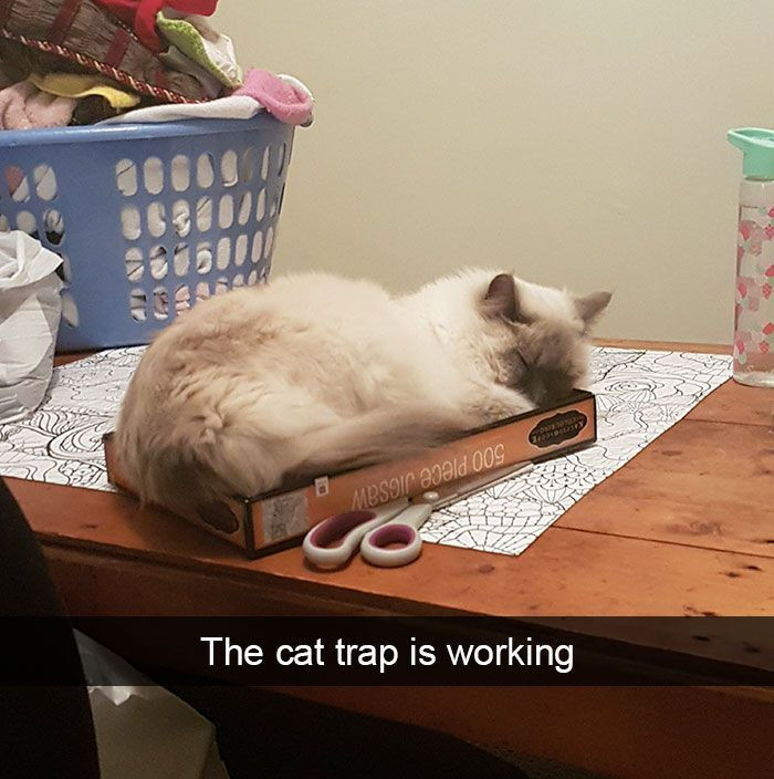 3. Setting a trap for a cat...