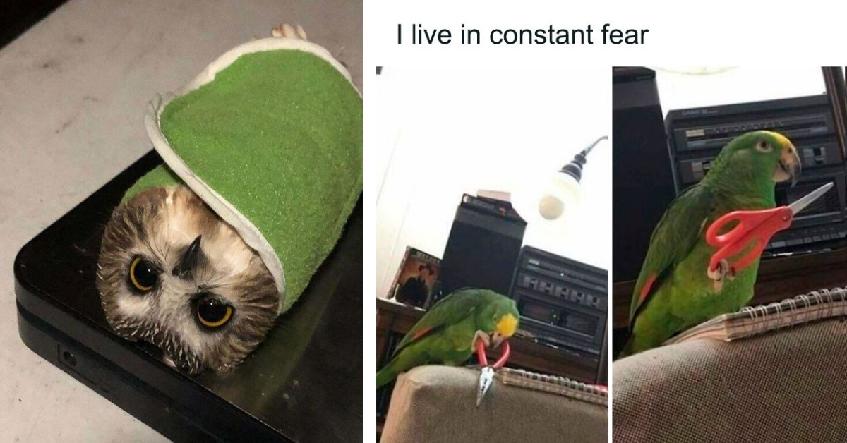 40 Funny Bird Posts That Are Too Adorable Not To Share