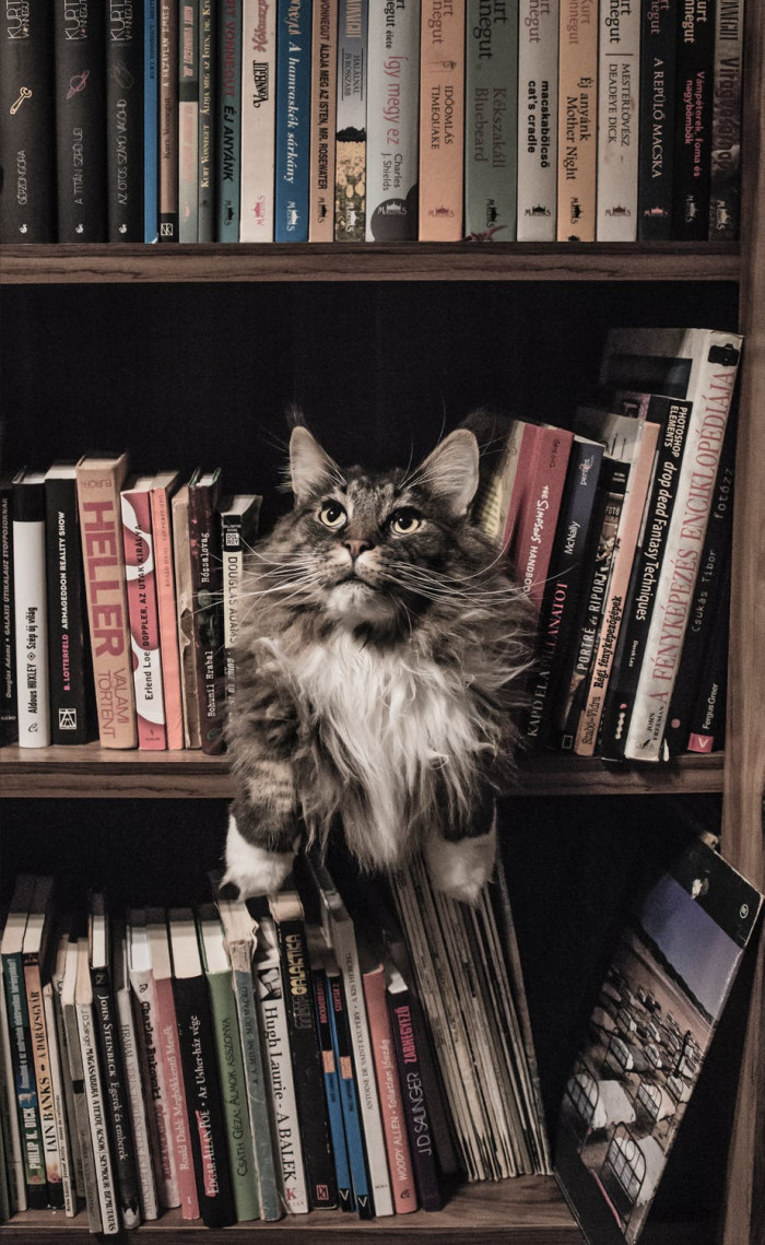 The study also proves that cats are more independent than dogs