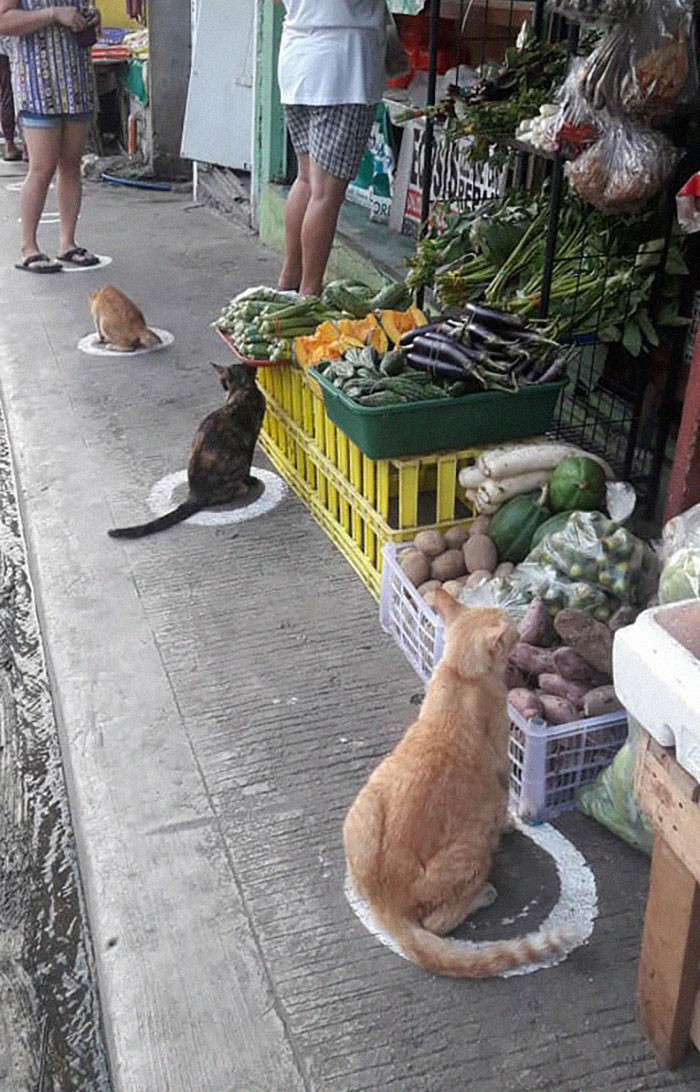 Coleen Joice Aquino shared pics of stray cats sitting inside of social distancing signs on a pavement in Quezon City