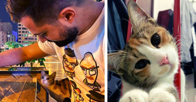 Stray Cat Followed A Man Home From A Cafe And Decided He Was Her Dad Now