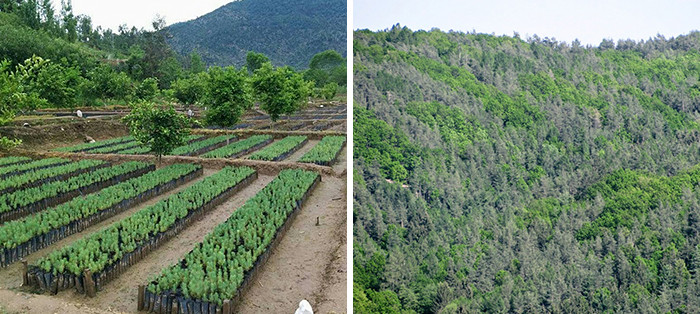 Pakistan has planted 1 billion trees and plans to plant 10 billion more over the next 5 years!