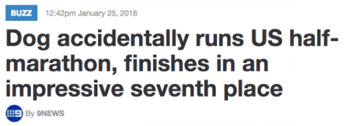 23. Imagine you were proud of finishing a half-marathon only to discover that a dog made better time than you?