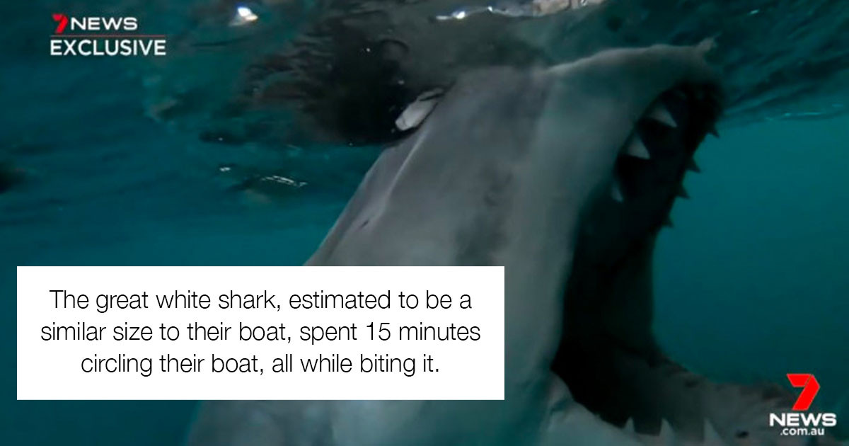 Australian Guy Has A Hilarious Response To A Great White Shark Circling His Boat
