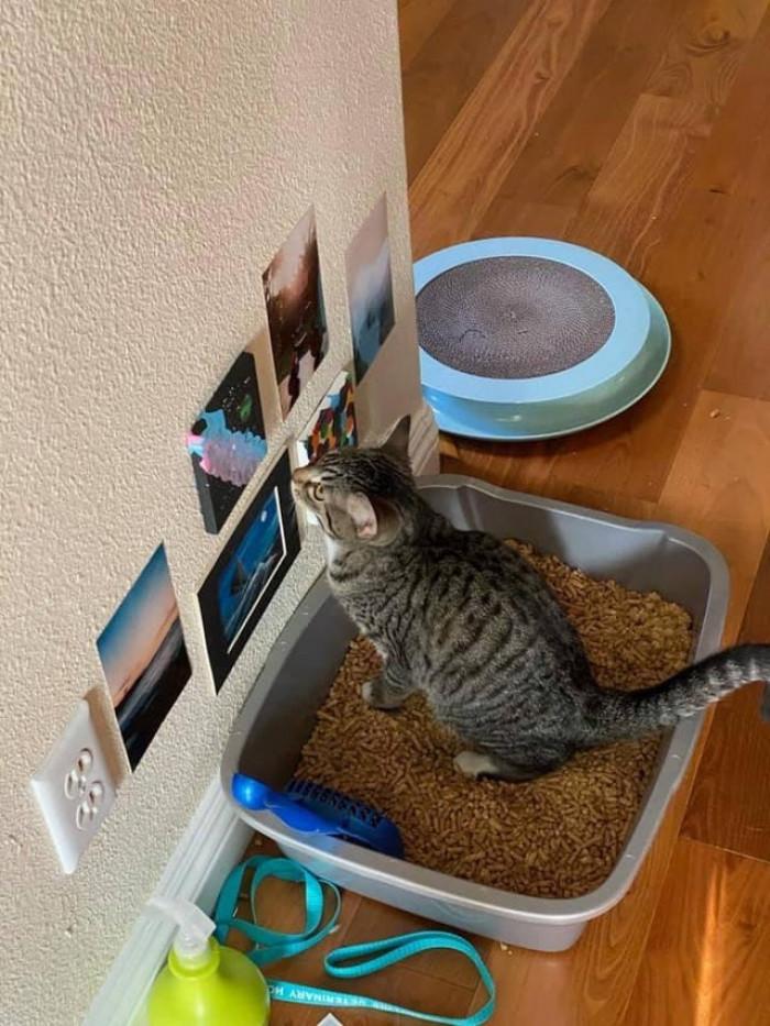 "3. ""A friend of mine has bathroom art for their cat."""