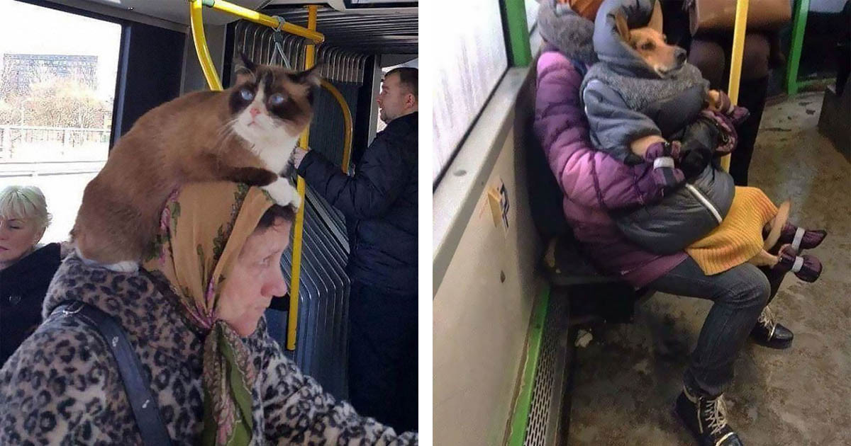 Hilarious IG Account Dedicated To Posting Unusual And Strange Things Observed On Public Transport