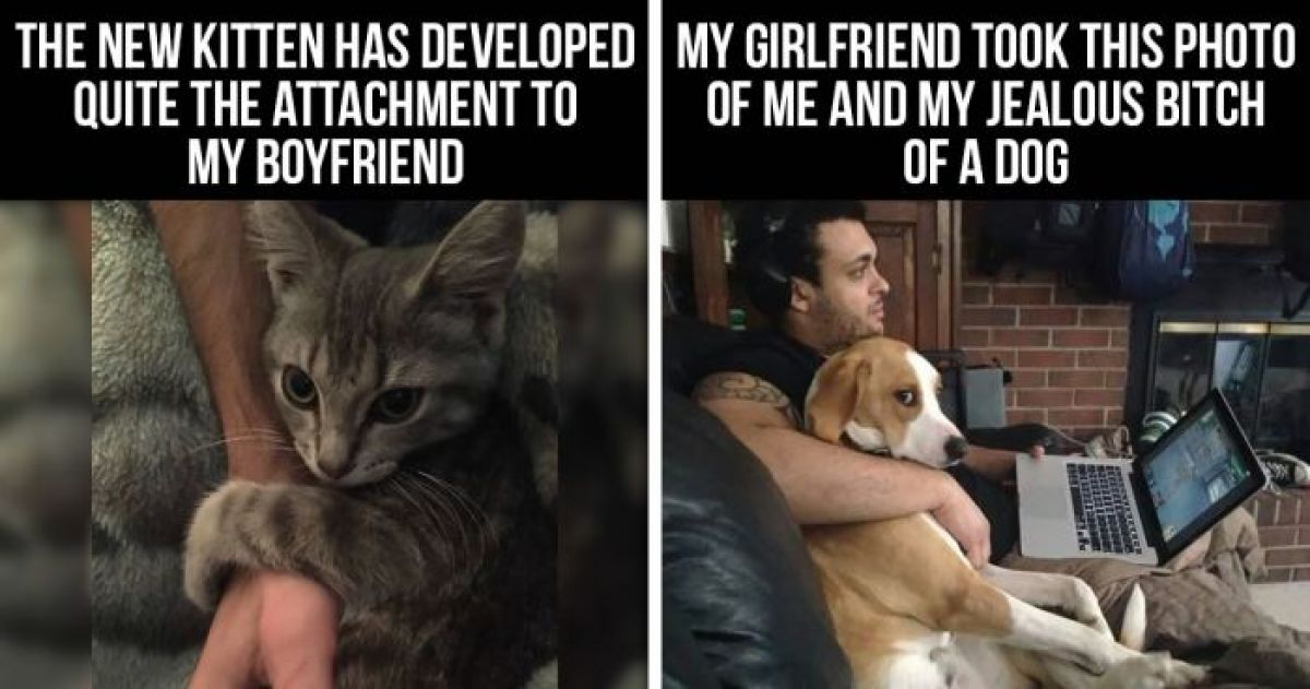 10+ People Whose Pets Shamelessly Stole Their Significant Others