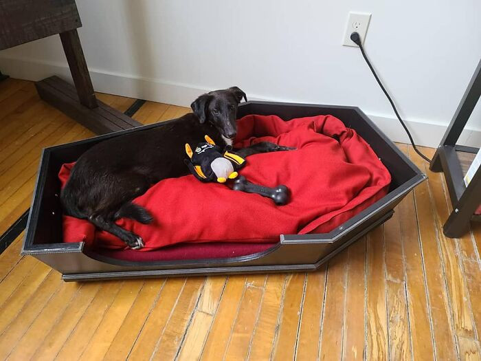 #24 Doggy coffin?