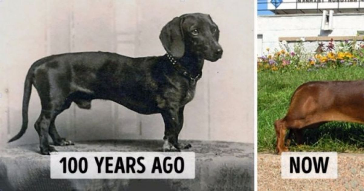 How 100 Years Have Changed Your Favorite Dog Breeds