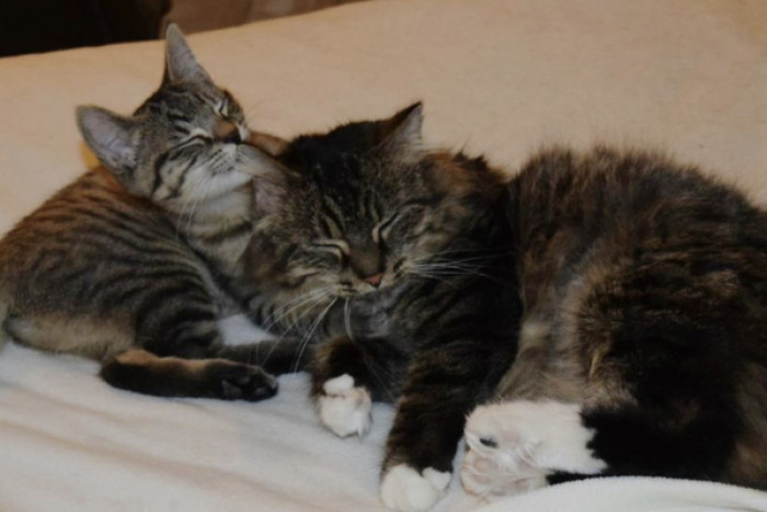 They are happy, loved and enjoying their new lives in their forever homes!