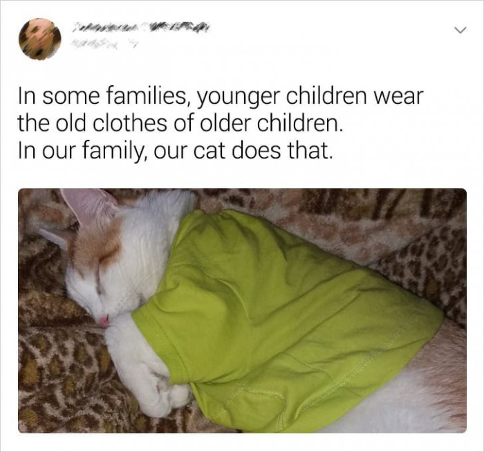 11. Furry Grandchildren