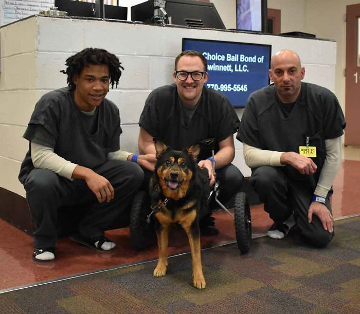 After being found as a stray, Bandit was put into the Gwinnett Jail Dogs Program, a program that saves shelter dogs from being euthanized by having inmates look after them.
