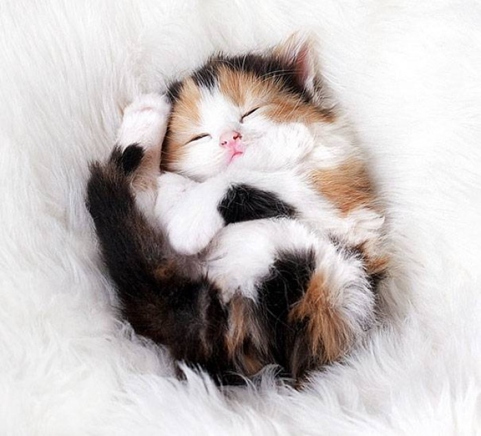 1. Sleepy and snuggly