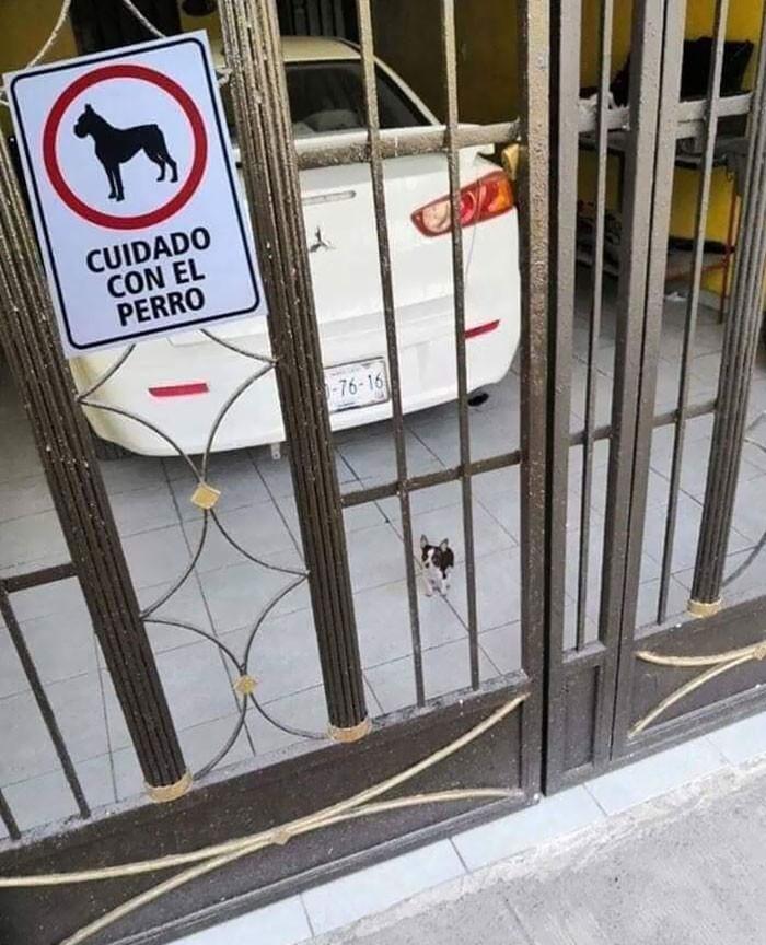 # 3 Por favor, cuidado com o cão